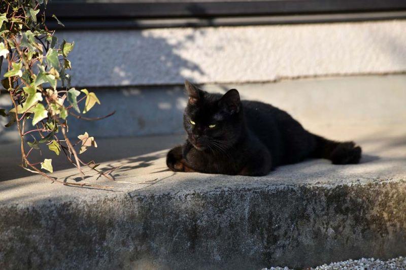 หนัง Only The Cat Knows หรือชื่อไทยว่า เจ้าเหมียวจิบิ หายไปไหนนะ