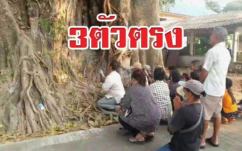 ข่าว Like สาระ - 3ตัวตรง! ชาวบ้านแห่ขอเลขเด็ด 'ต้นโพธิ์' โบราณ 500 ปี